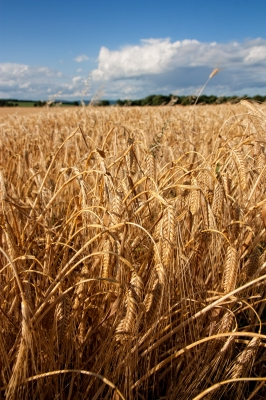 The Harvest Poem by Caroline Gavin of Purposeful Pathway Christian Life Coaching