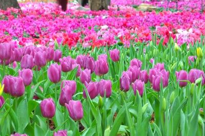 Beautiful Blessings Poem by Caroline Gavin Purposeful Pathway Christian Life Coaching