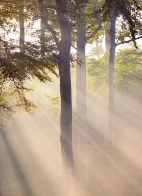 Rooted in Jesus Poem - Christian Poem and eCard - Christian Business Coaching