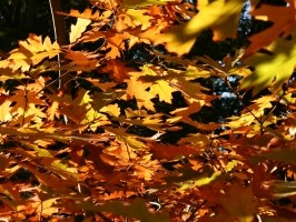 Business Post: Letting Go with the Leaves