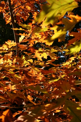 Letting Go with the Leaves Christian Business Tip