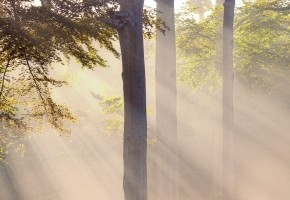 Free Image Misty Atmosphere and Sunbeam by dan