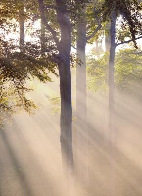 Christian Poem: Sitting in Sunshine