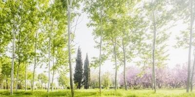 Free Image Spring Park by Evgeni Dinev